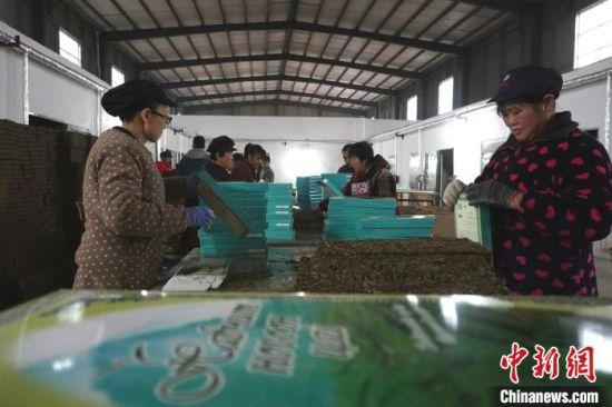 图为光山四季香茶业生产车间里,工人正在赶制销往蒙古国的砖茶。 阚力 摄