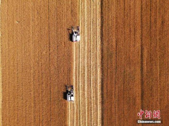 资料图:吉林省镇赉县小冰麦秋收场景。 中新社 潘晟昱 摄