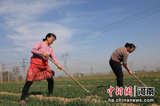 河南省延津县农民在麦田里劳作,为小麦丰收打下坚实基础 邓小强 摄