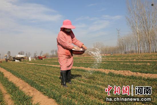 河南省延津县农民在麦田里劳作,为小麦丰收打下坚实基础。 邓小强 摄