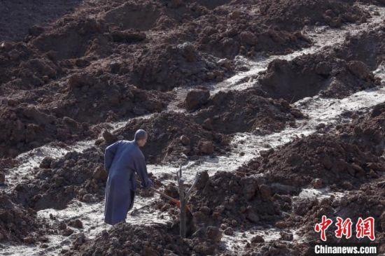 正在种植树木的少林僧人。 少林寺供图