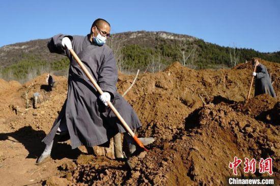 正在种植树木的少林僧人。 少林寺供图 摄
