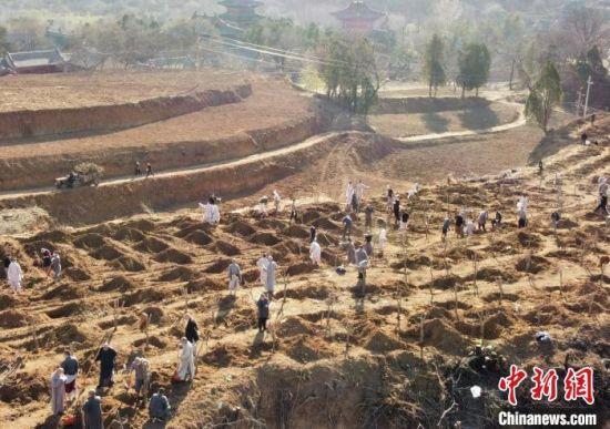 正在种植树木的少林僧众们,忙得热火朝天。 少林寺供图 摄