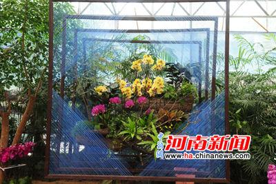 河南省第七届蝴蝶兰展将在郑州绿博园开幕